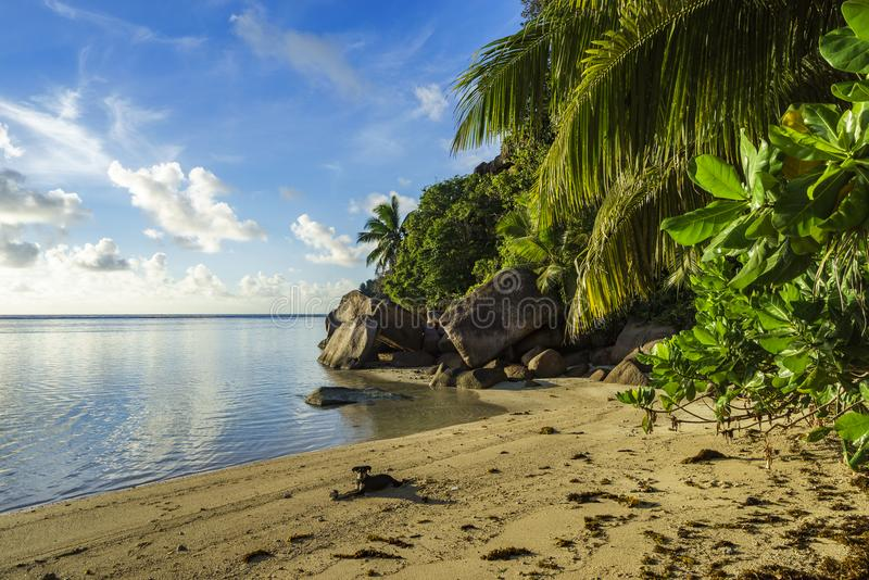Download Graaf Bij Een Mooi Paradijsstrand Op Seychellen 4 Stock Afbeelding - Afbeelding bestaande uit hond, eiland: 107708849