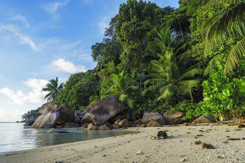 Download Graaf Bij Een Mooi Paradijsstrand Op Seychellen 5 Stock Foto - Afbeelding bestaande uit palm, struiken: 107708924