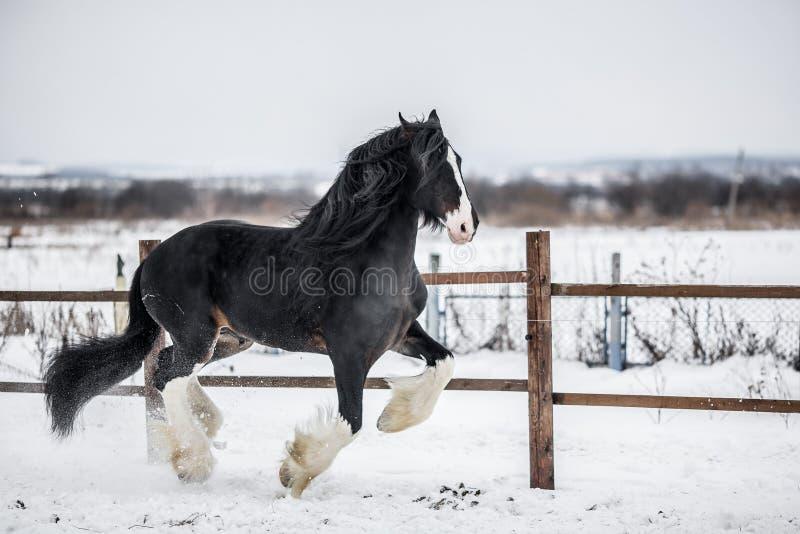 Graafschappaard royalty-vrije stock afbeeldingen