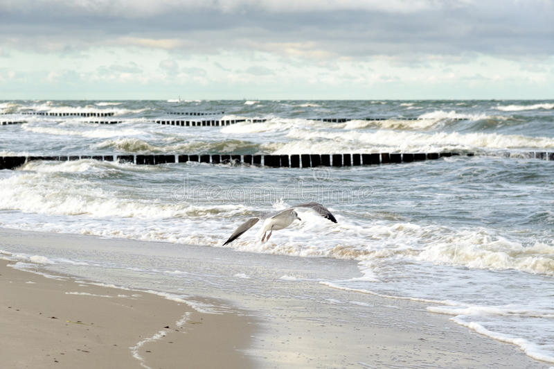 Graal-Muritz. Groynes in the surf on the German Baltic coast stock photo