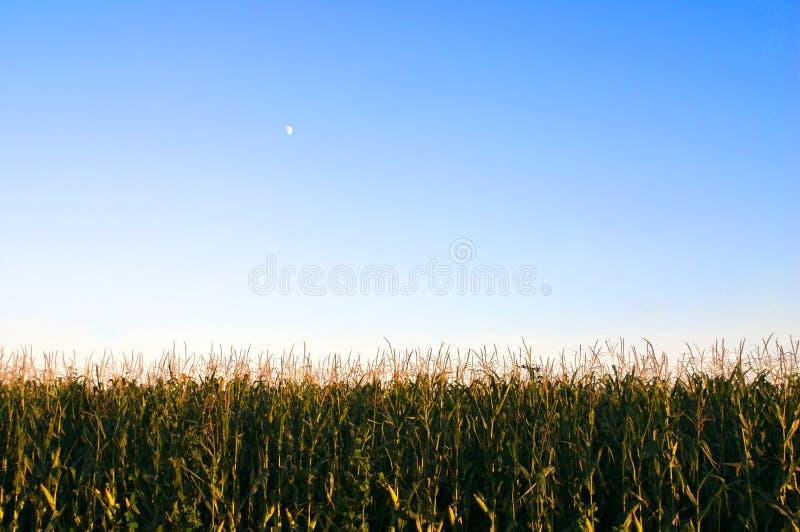 Graan en de Maan stock fotografie