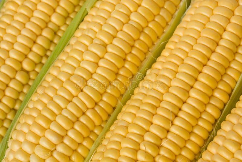Graan of suikermaïs op de maïskolfclose-up stock foto