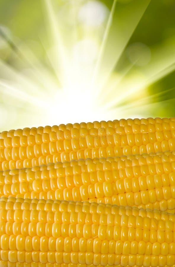 Graanclose-up op een groene achtergrond stock fotografie