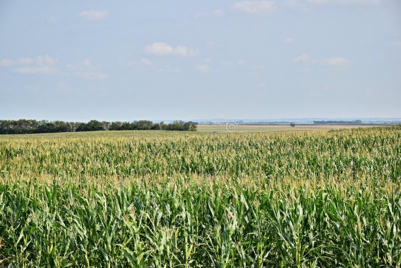 Graangebied aan horizon stock foto