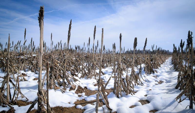Graangebied in de sneeuw royalty-vrije stock afbeelding