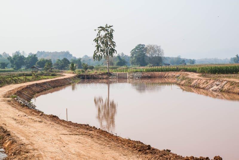 Graangebied in droog seizoen, Thailand stock afbeelding