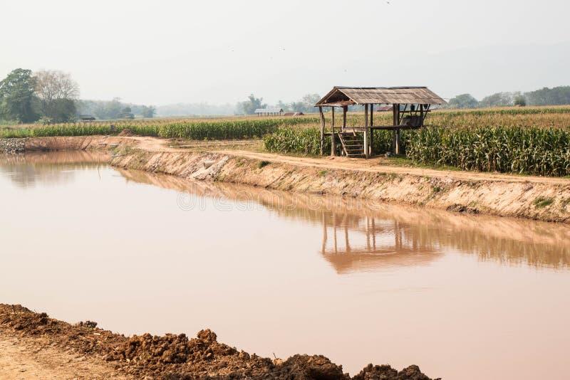 Graangebied in droog seizoen, Thailand royalty-vrije stock foto