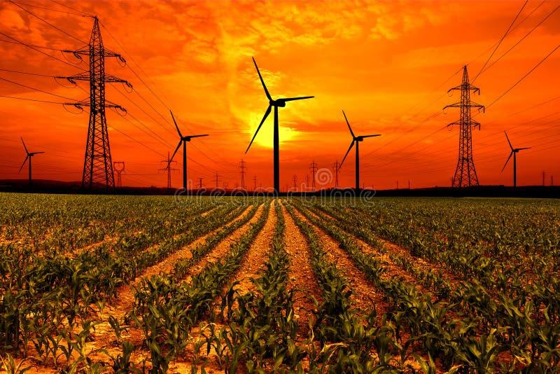 Graangebied met van de elektriciteitspyloon en wind turbines bij zonsondergang royalty-vrije stock afbeelding