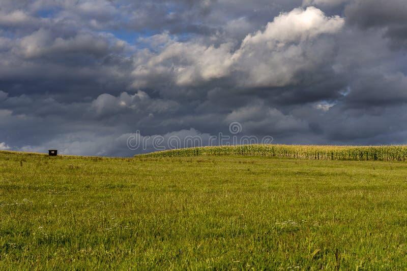 Graangebied onder onweerswolken royalty-vrije stock afbeeldingen