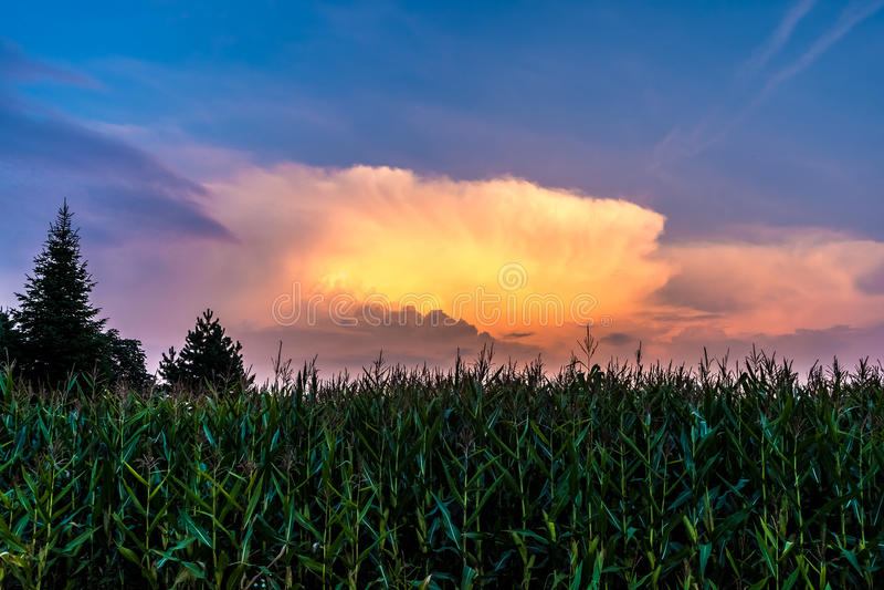 Graangebied in zonsondergang stock fotografie