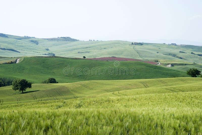 Graangebieden stock fotografie