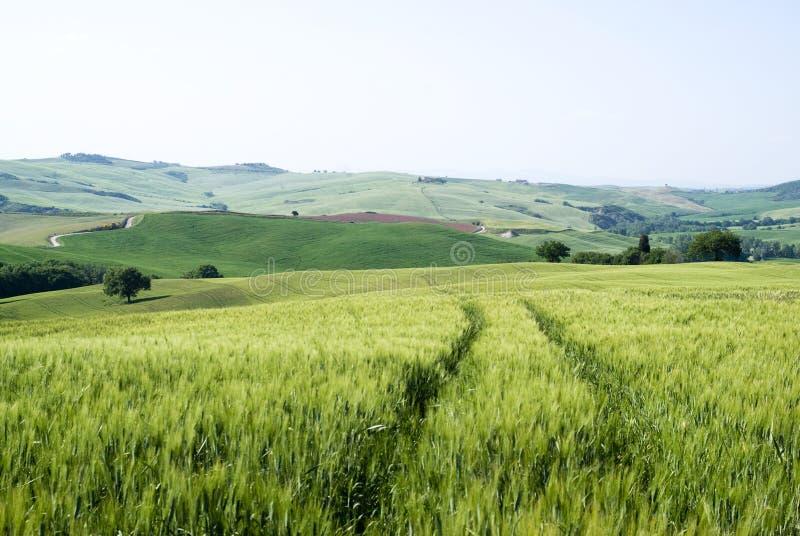Graangebieden stock afbeelding