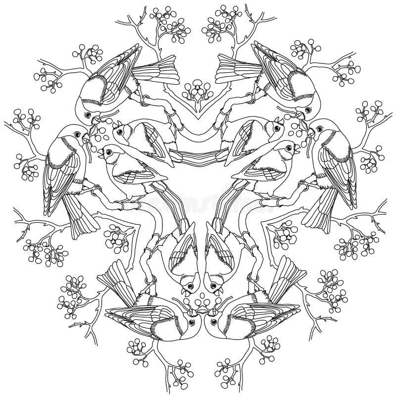 Grabado blanco y negro del ejemplo del vector de la mandala de los pájaros del piñonero ilustración del vector