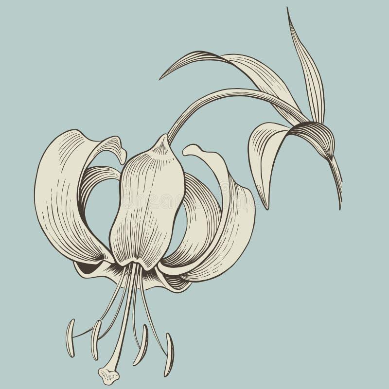 Grabado de la flor del lirio o gráfico de la tinta. Vector ilustración del vector