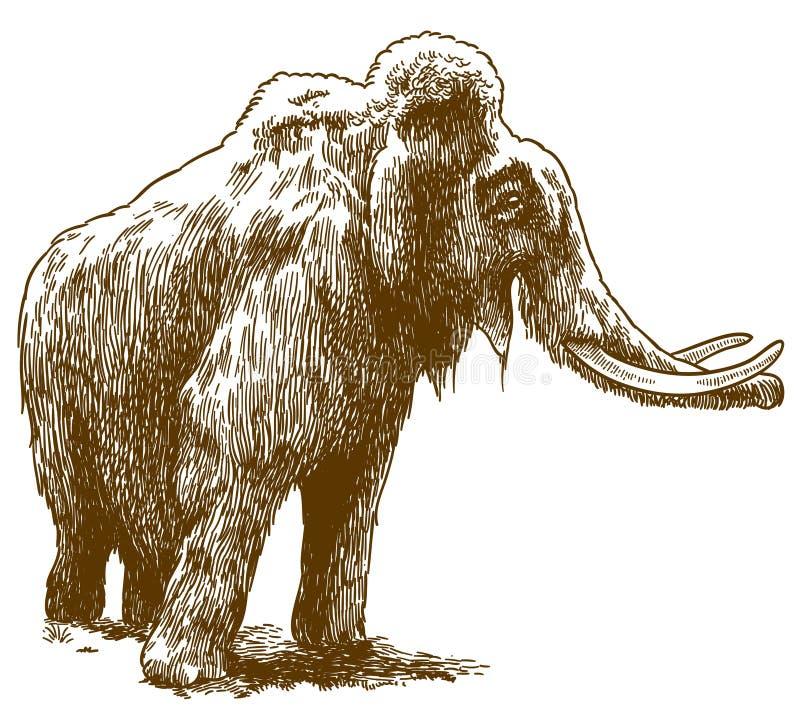 Grabado del ejemplo de dibujo del mamut lanoso ilustración del vector