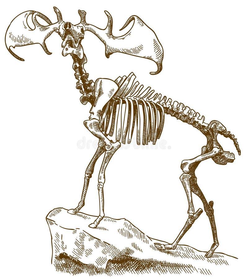 Grabado del ejemplo del esqueleto de los ciervos de los megaloceros ilustración del vector