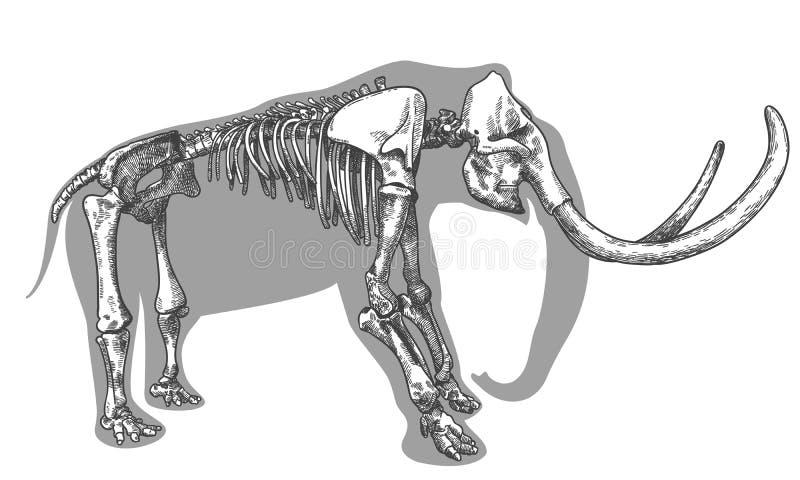 Grabado del ejemplo del esqueleto gigantesco stock de ilustración