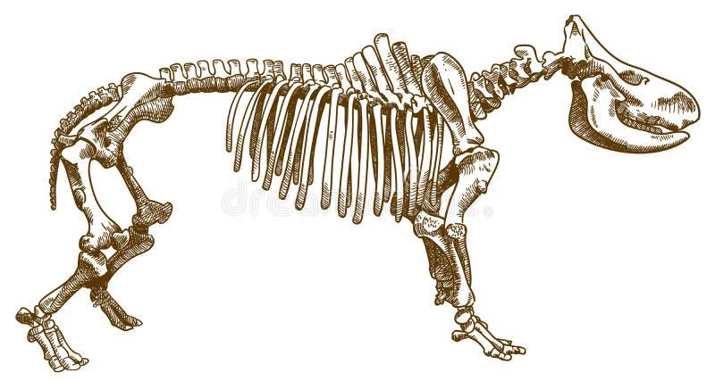 Grabado del ejemplo del esqueleto del rinoceronte stock de ilustración