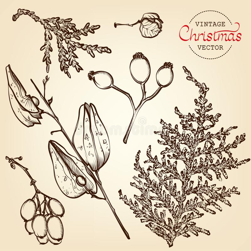 Grabado del vector de las hierbas de la Navidad del vintage libre illustration