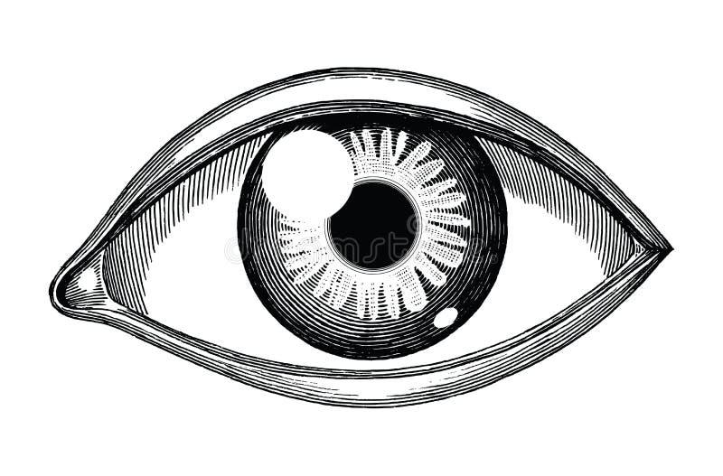 Grabado del vintage del drenaje de la mano de la referencia del ojo humano aislado en el fondo blanco ilustración del vector