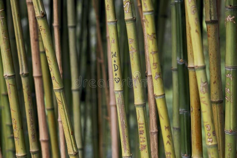 Grabados del amor en los bambúes imágenes de archivo libres de regalías