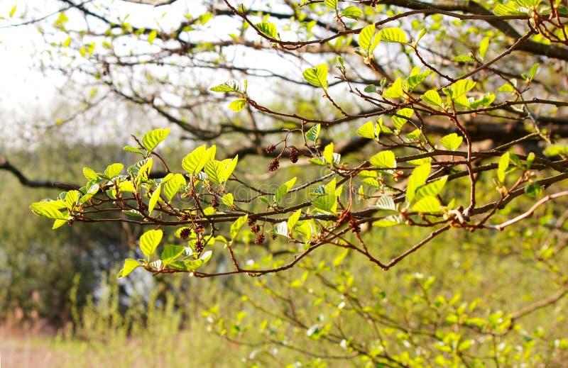 Grabau - printemps au lac - je - image libre de droits