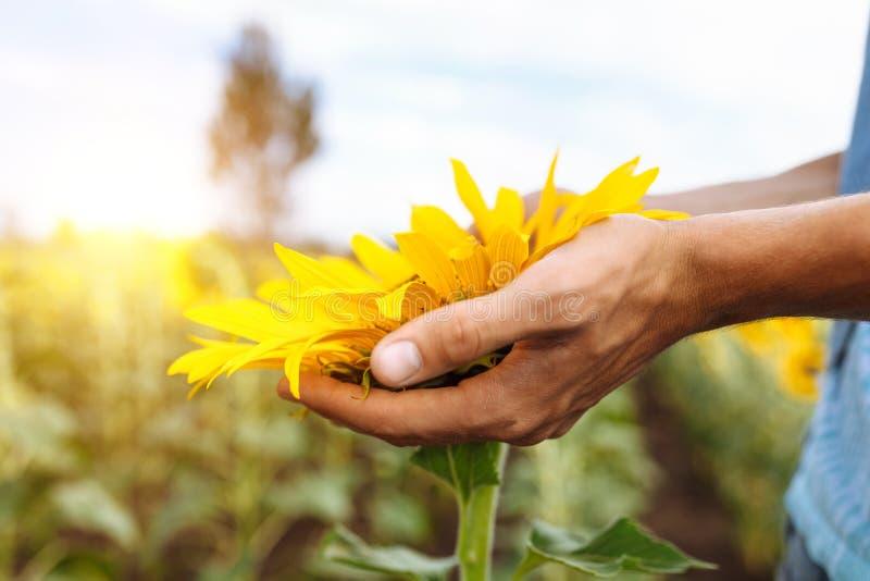Grabben i exponeringsglas ligger under den bränning solen på gräset eller höet, sommarsemestern, stående av en man i exponeringsg fotografering för bildbyråer
