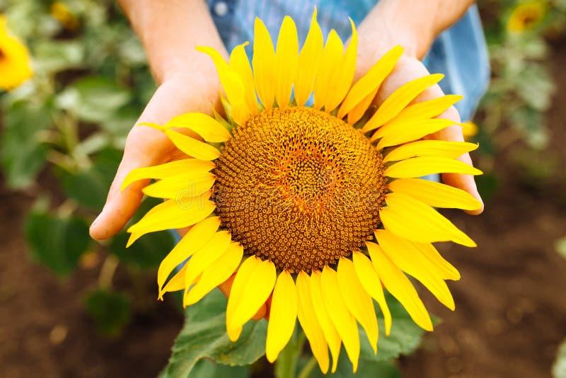 Grabben i exponeringsglas ligger under den bränning solen på gräset eller höet, sommarsemestern, stående av en man i exponeringsg royaltyfri fotografi