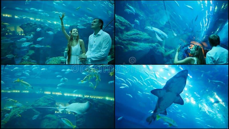 Grabben och flickan går på ett undervattens- akvarium arkivbilder
