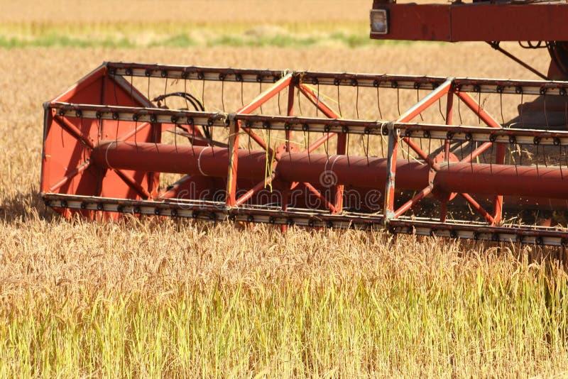 Grabber do arroz imagens de stock