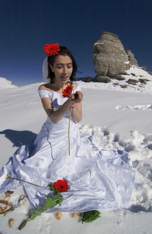 grace, panna młoda karmazynów kwiaty zdjęcie stock