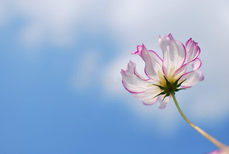 Download Graceful Flower In Blue Sky Stock Image - Image of nice, flower: 23734495