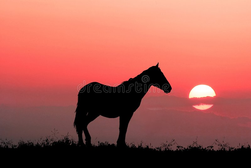 Graceful Horse Stock Images