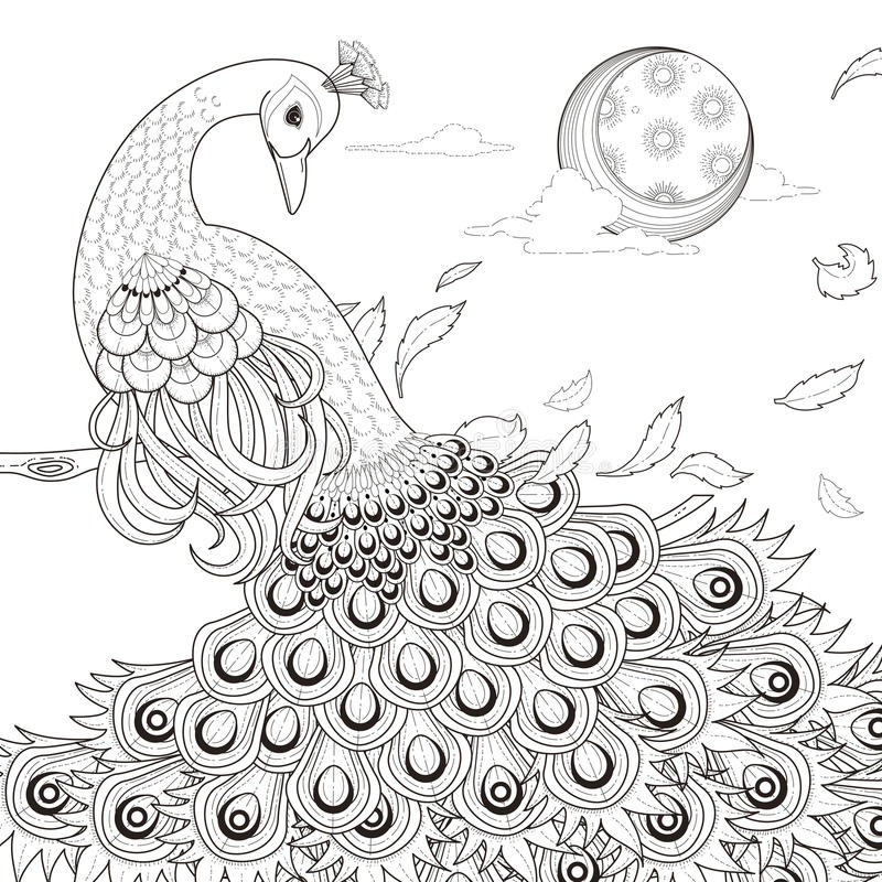Graceful peacock coloring page stock illustration