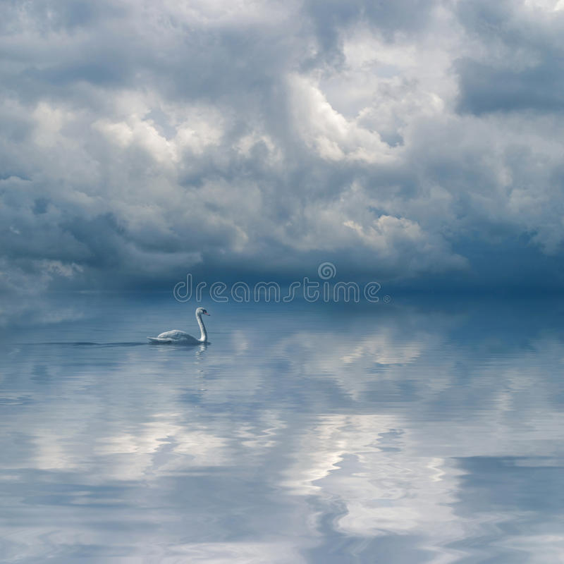 Graceful swan against cloudy sky background stock photos