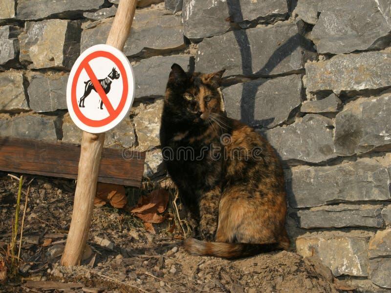 Gracejo - um gato, nenhuns cães fotos de stock royalty free