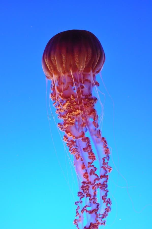graci morze zdjęcie stock