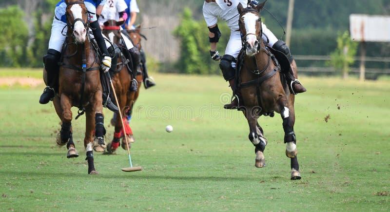 Gracze jadą na horseback chwytać polo piłkę w srogiej prędkości obraz royalty free