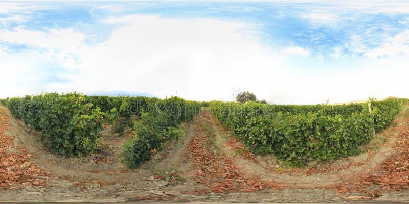 360 grad vingård royaltyfria bilder