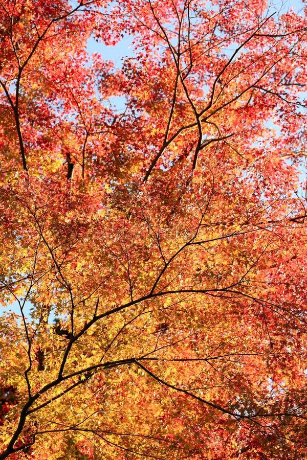 Gradação das folhas e da cor de outono imagens de stock royalty free