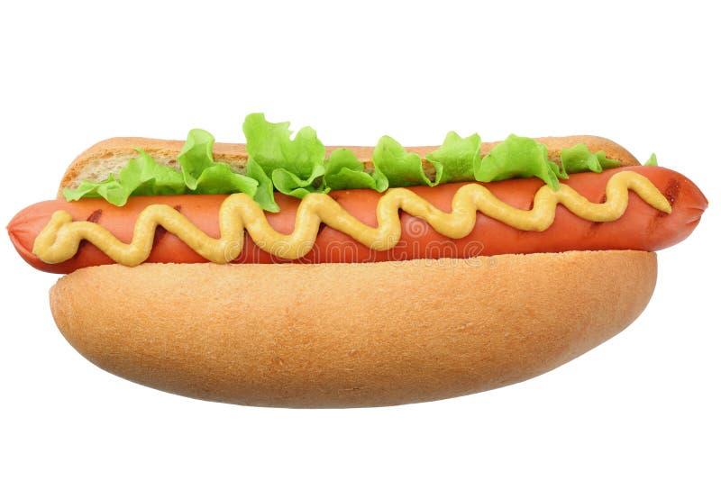 Grade do cachorro quente com alface e mostarda isolada no fundo branco Fast food imagem de stock royalty free