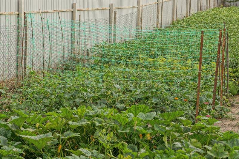 Grade em camas do jardim com as plantas verdes perto da cerca foto de stock