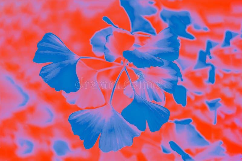 Gradient classic blue and orange lush lava colors, ginkgo biloba leaves pattern. Vivid background stock photo
