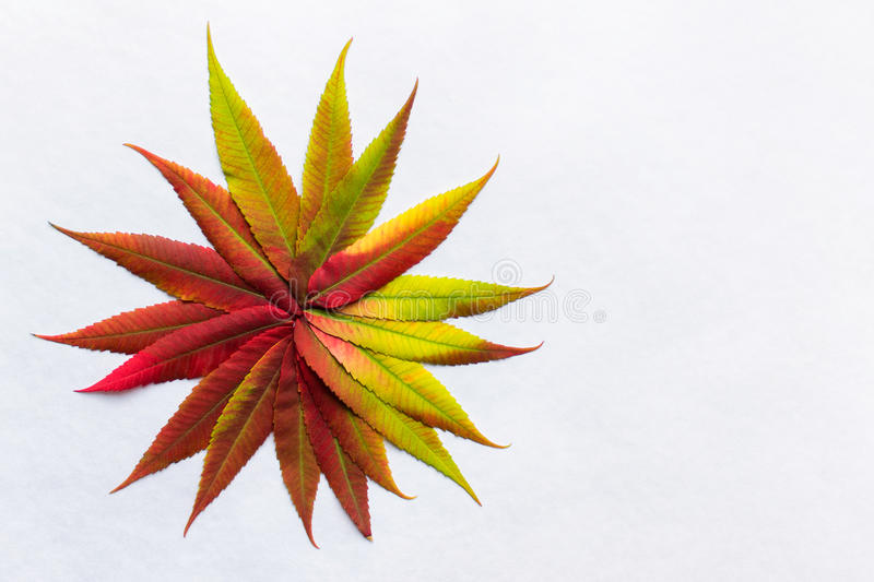 Gradient colored leaves arranged as flower stock image