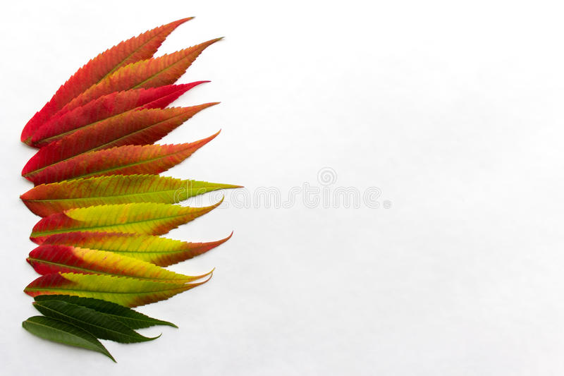 Gradient colored leaves arranged in a row at the left side of image stock photos