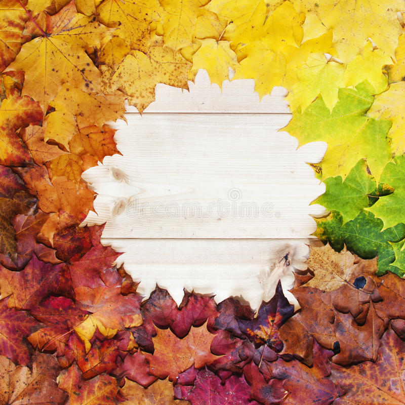 Gradient of multicolored fall maple leaves. Autumn frame stock photo