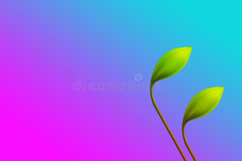 Gradient  pink and blue ,purple with green flower. And empty space stock photos