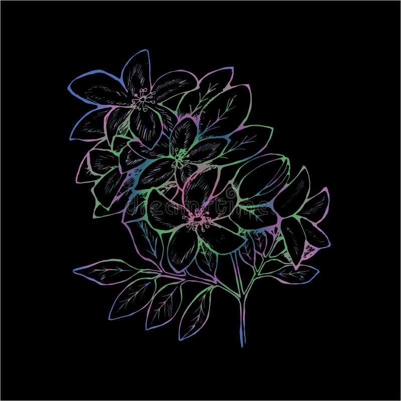 Gradientowa ilustracja gałąź kwiaty bez R?czne grafika ilustracji