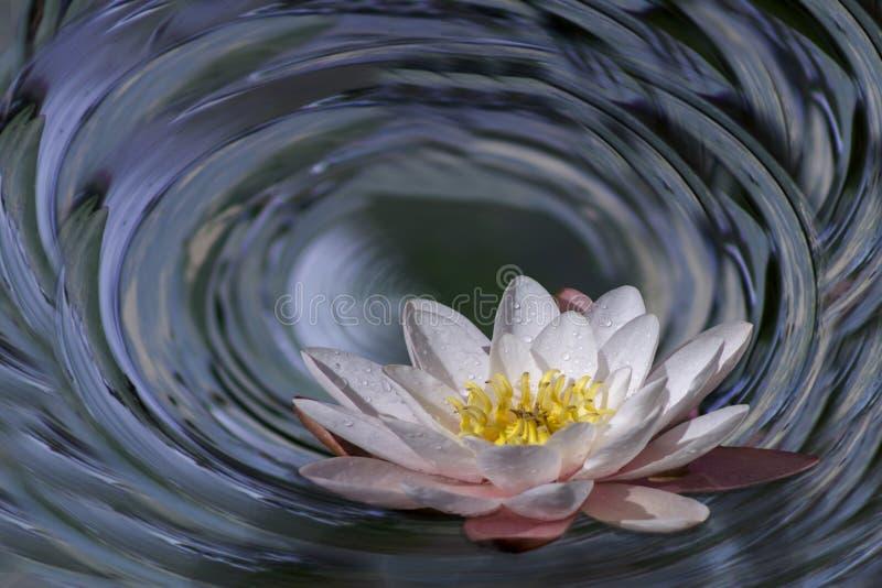 Grado 360, panorama polar del loto en agua imagenes de archivo