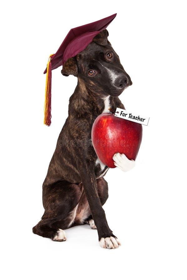 Graduado da escola da obediência do cão fotografia de stock royalty free